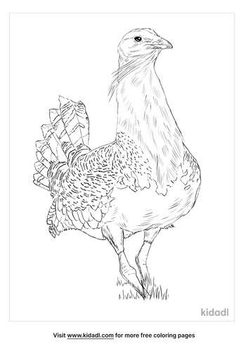 great-bustard-coloring-page