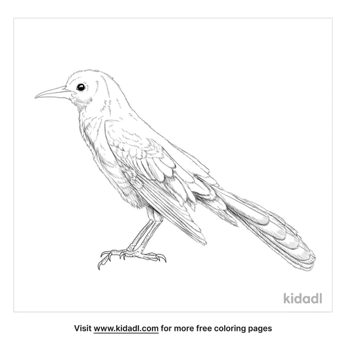great-tailed-grackle-coloring-page