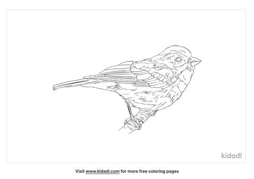 greater-antillean-bullfinch-coloring-page
