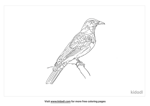 greater-green-leafbird-coloring-page