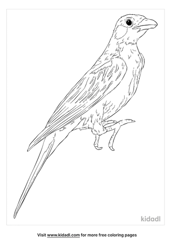 greater-honeyguide-coloring-page