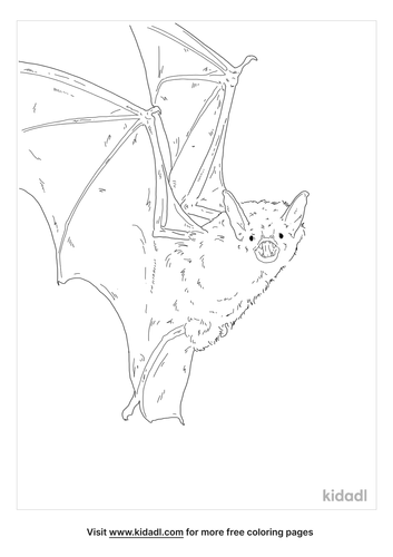 greater-mouse-eared-bat-coloring-page