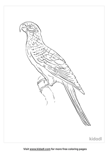 greater-vasa-parrot-coloring-page