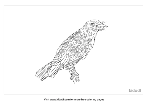 green-barbet-coloring-page