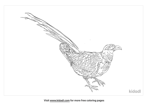 green-billed-malkoha-coloring-page