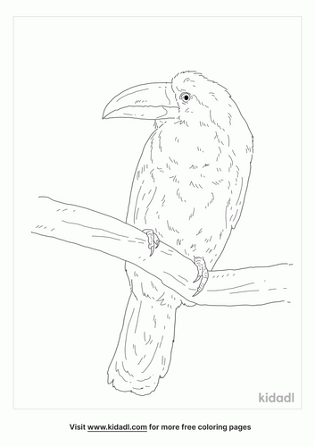 green-billed-toucan-coloring-page