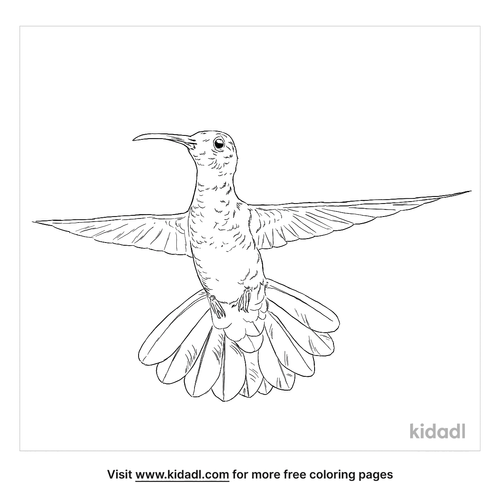 green-breasted-mango-coloring-page