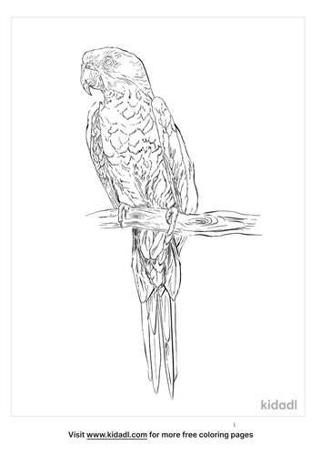 green-cheeked-conure-coloring-page