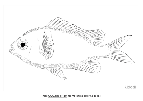 green-chromis-coloring-page