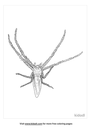 green-crab-spider-coloring-page