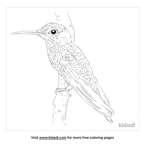 green-crowned-brilliant-coloring-page