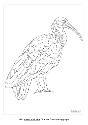 green-ibis-coloring-page