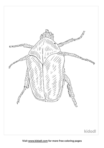 green-june-beetle-coloring-page