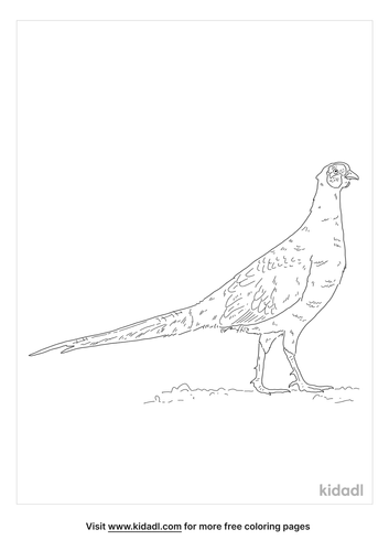 green-pheasant-coloring-page
