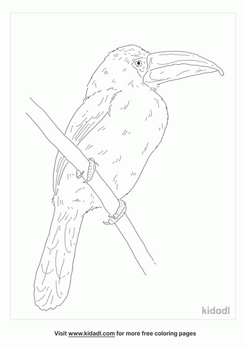 green-toucanet-coloring-page
