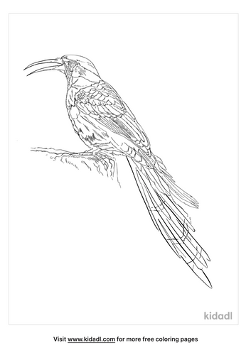 green-wood-hoopoe-coloring-page