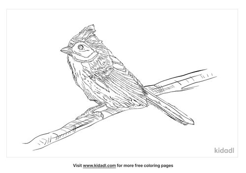 grey-headed-canary-flycatcher-coloring-page