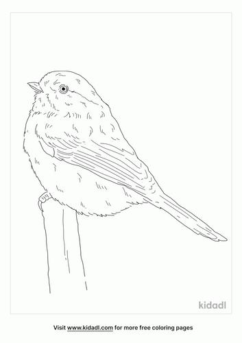 grey-headed-chickadee-coloring-page