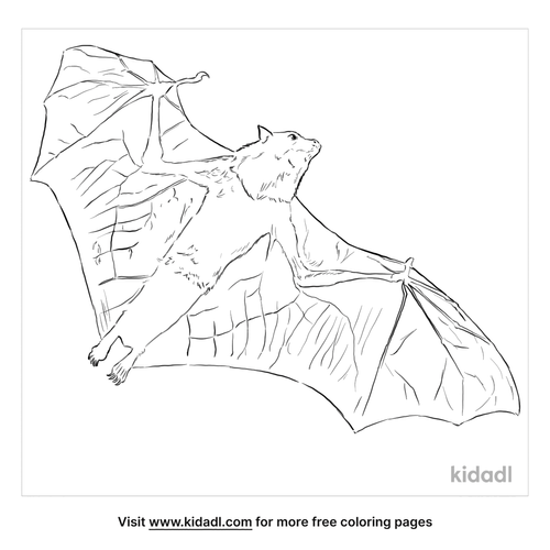 grey-headed-flying-fox-coloring-page