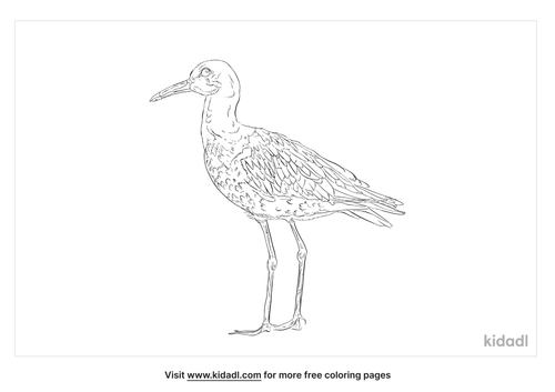 grey-headed-lapwing-coloring-page
