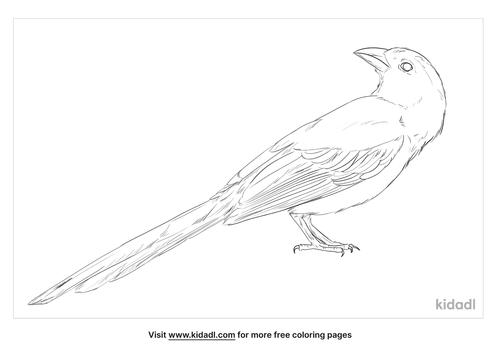 grey-treepie-coloring-page