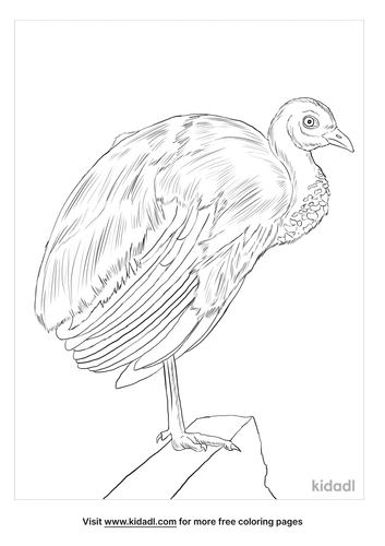 grey-winged-trumpeter-coloring-page