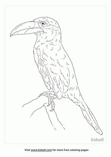 guianan-toucanet-coloring-page