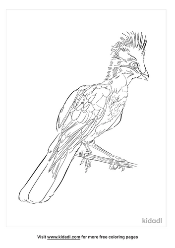 guinea-turaco-coloring-page