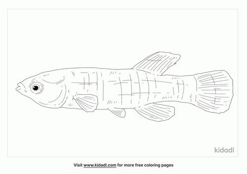 gulf-killifish-coloring-page