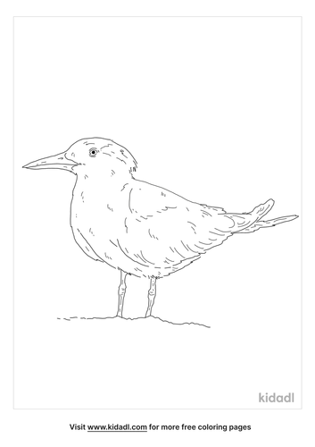 gull-billed-tern-coloring-page