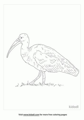 hadada-ibis-coloring-page