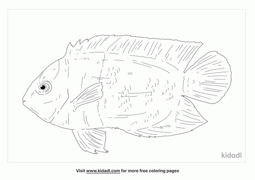 half-black-angelfish-coloring-page