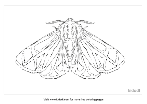 harnessed-tiger-moth-coloring-page