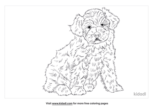 havapoo-coloring-page