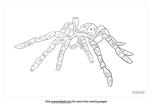 hercules-baboon-spider-coloring-page