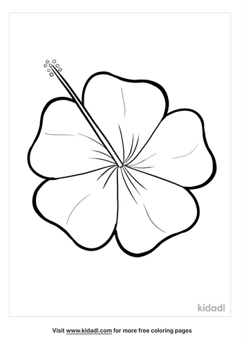 hibiscus drawing-1-lg.png