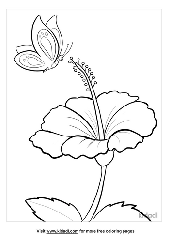 hibiscus drawing-2-lg.png