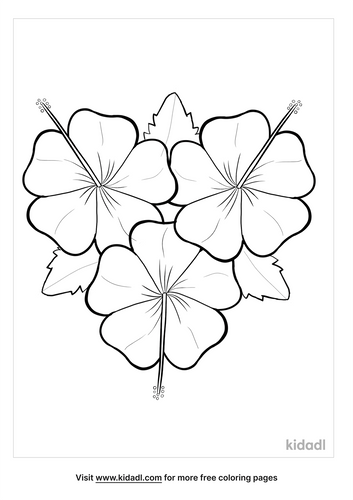 hibiscus drawing-3-lg.png