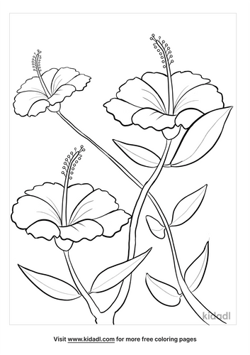 hibiscus drawing-5-lg.png