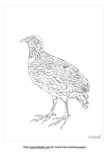hill-partridge-coloring-page