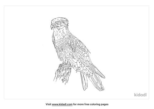 himalayan-buzzard-coloring-page