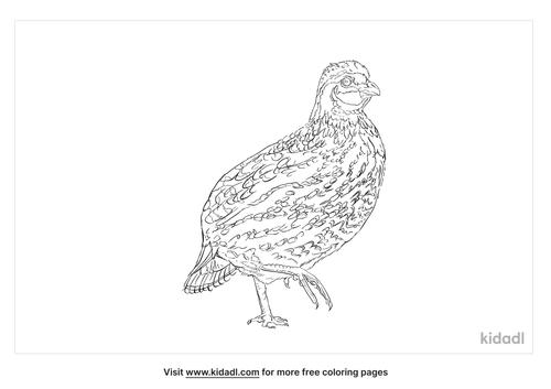 himalayan-snowcock-coloring-page