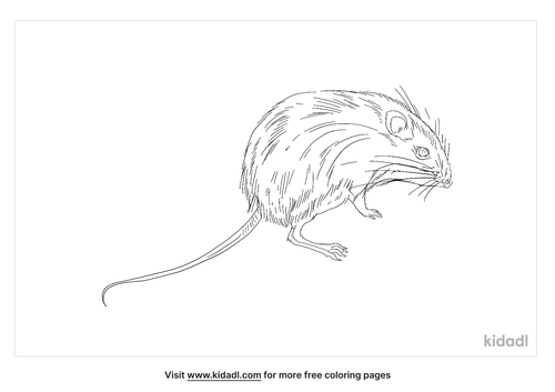 hispid-pocket-mouse-coloring-page
