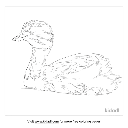 hoary-headed-grebe-coloring-page