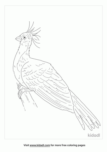 hoatzin-coloring-page