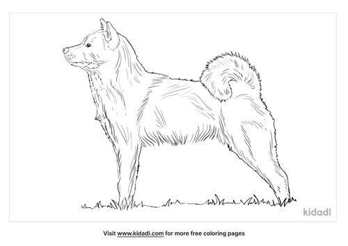 hokkaido-dog-coloring-page