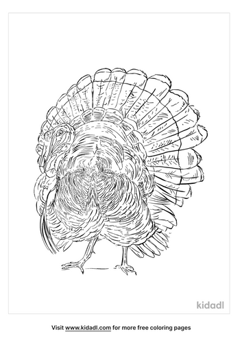 holland-turkey-coloring-page