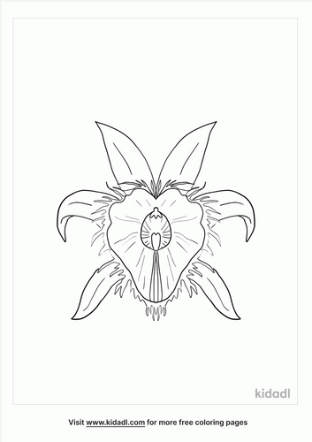 honduras-national-flower-coloring-page.png