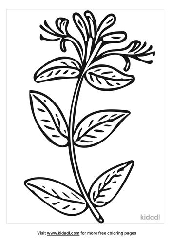 honeysuckle-rose-coloring-page.png