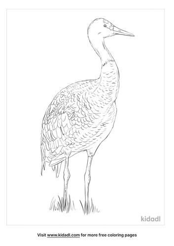 hooded-crane-coloring-page